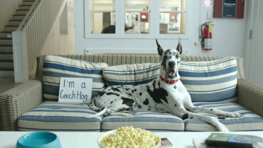 NKLA Pets Shaming Commercial - Video Production Los Angeles | Fiction Pictures